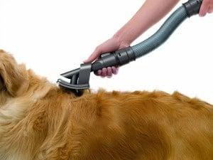 ¡Chollo! Cepillo Groomer para mascota Dyson. Descuento 27%